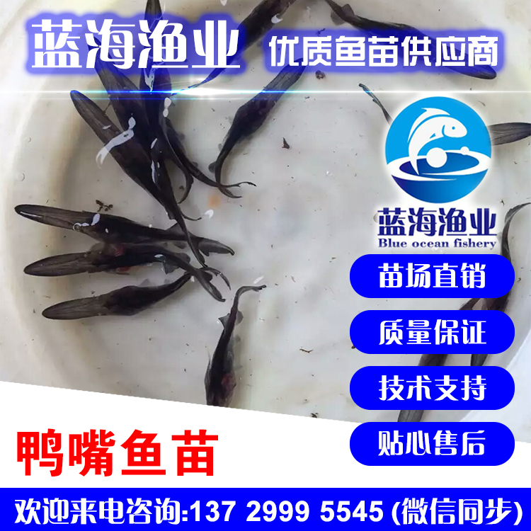 蓝海渔业_鸭嘴鱼苗,匙吻鲟鱼苗13729995545